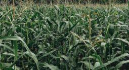 agriculture, agritech startup US$2 mil prize Milken-Motsepe Innovation Prize