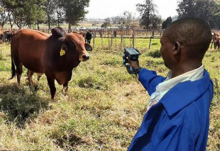 Zim becomes the first in Africa to roll out E-Livestock's cattle logging system